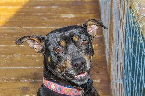Foster Dog, Elsie