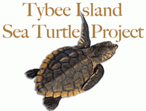Tybee Island Sea Turtles, Mermaid Morning Bliss Coffee