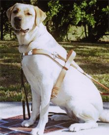 Service Dogs and Guide Dogs