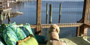 doggie dock-Pet-Friendly Places on Tybee Island