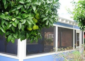 pile your christmas presents under the fruit trees