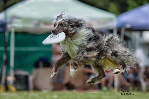 flying dogs in savannah
